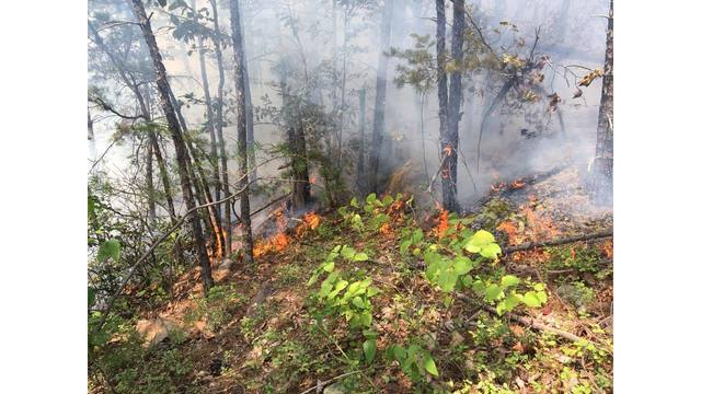 200 acres burning in English Mountain forest fire