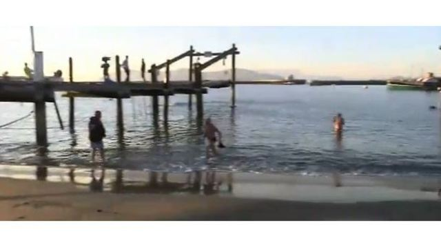 Sea lion attacks close cove in San Francisco Bay