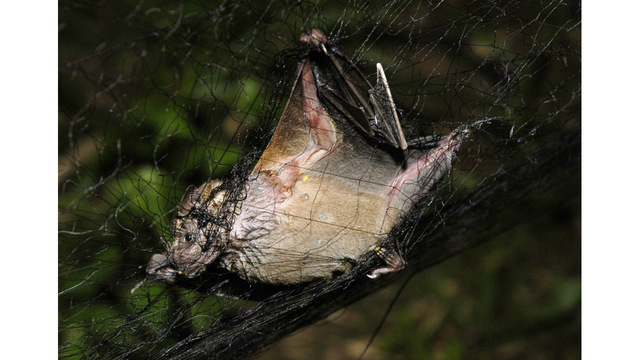 Florida boy dies of rabies after sick bat scratches him