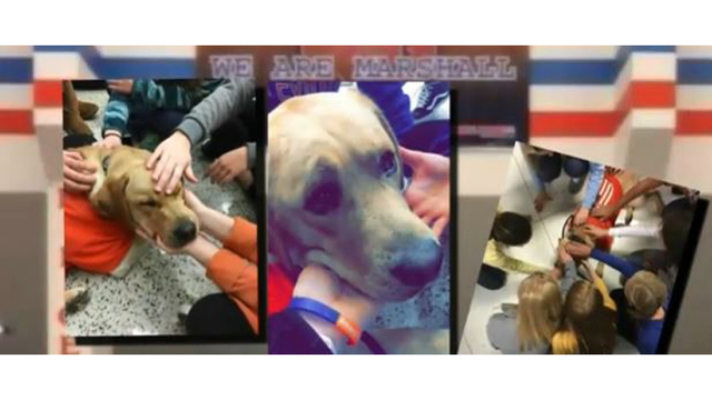 Therapy dogs help comfort students after Kentucky school shooting