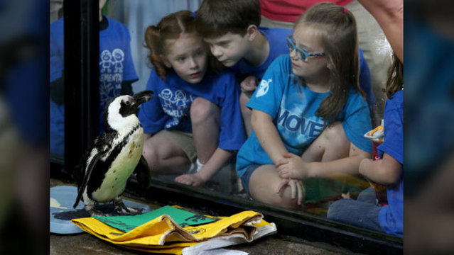 Beloved Knoxville Zoo penguin 'Gypsy' dies at 30