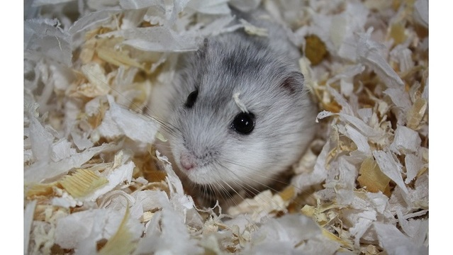 Airline told me to flush pet hamster, Florida woman says