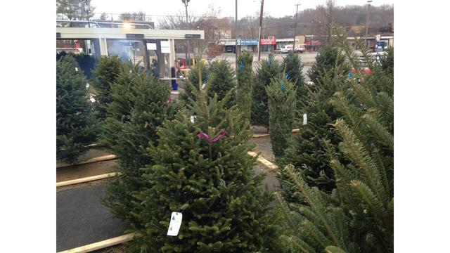 knoxville business gives away free christmas trees to needy families