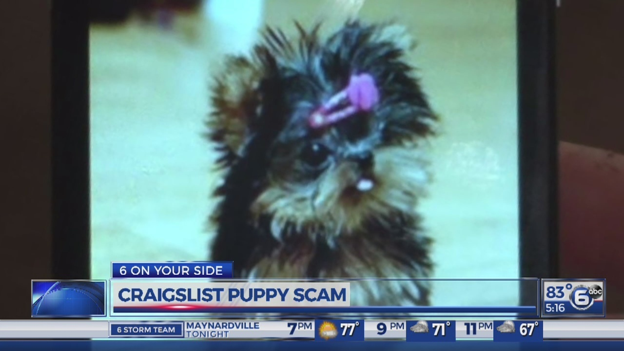 Maryville Couple Taken In By Craigslist Puppy Scam