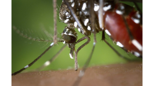 4 more areas of Knox County to be sprayed for mosquitoes