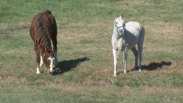 Neglected horses recover after Facebook post leads to rescue