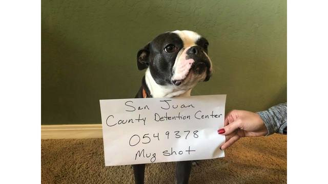 Dog 'arrested' for attacking Christmas decoration