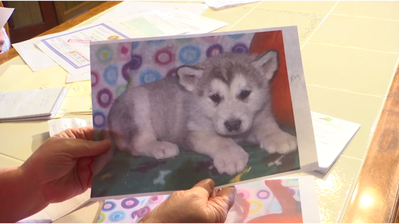 Scammers To Blame For Craigslist Puppies That Never Arrived