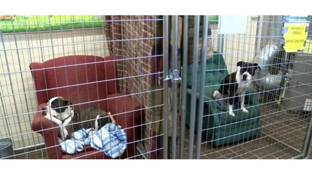 Animal shelter makes dogs feel at home with lounge chairs