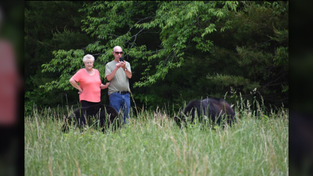 Photographer captures people dangerously close to Cades Cove bears