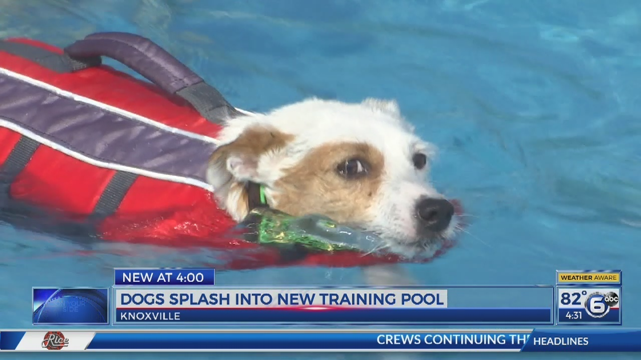 Dogs Splash Into New Training Pool At K9 Center Of East Tennessee
