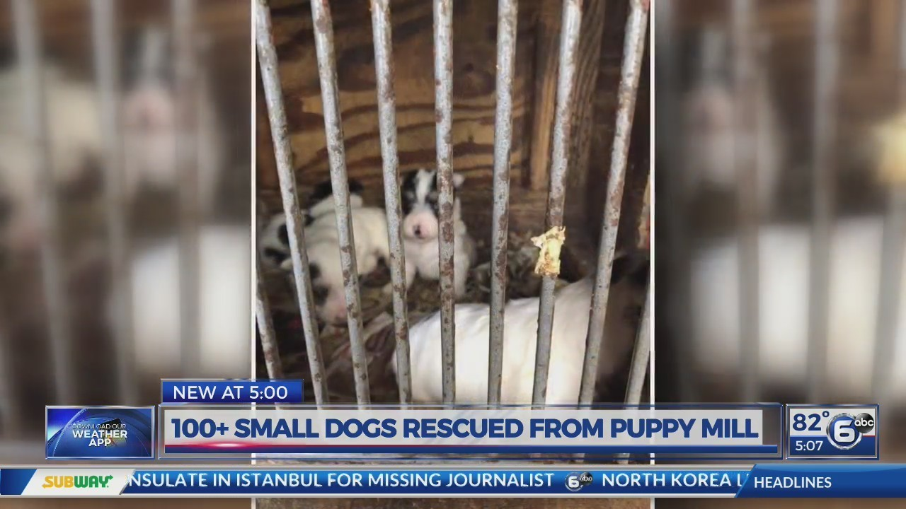 More Than 100 Small Dogs Rescued From East Tennessee Puppy Mill