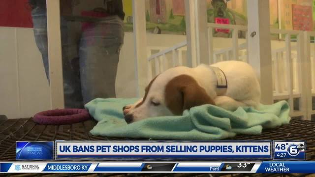 Uk Bans Pet Shops From Selling Puppies Kittens