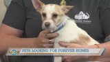 Meet Shrimpy The Humane Society Of The Tennessee Valley's Pet Of The Week