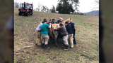 Crews rescue horse from ditch in Knox County