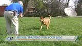 The Upbeat K9 helping build a stronger bond between pets and their owners