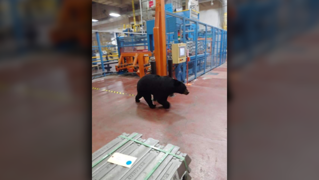 HR: Use caution if you see a bear in the plant